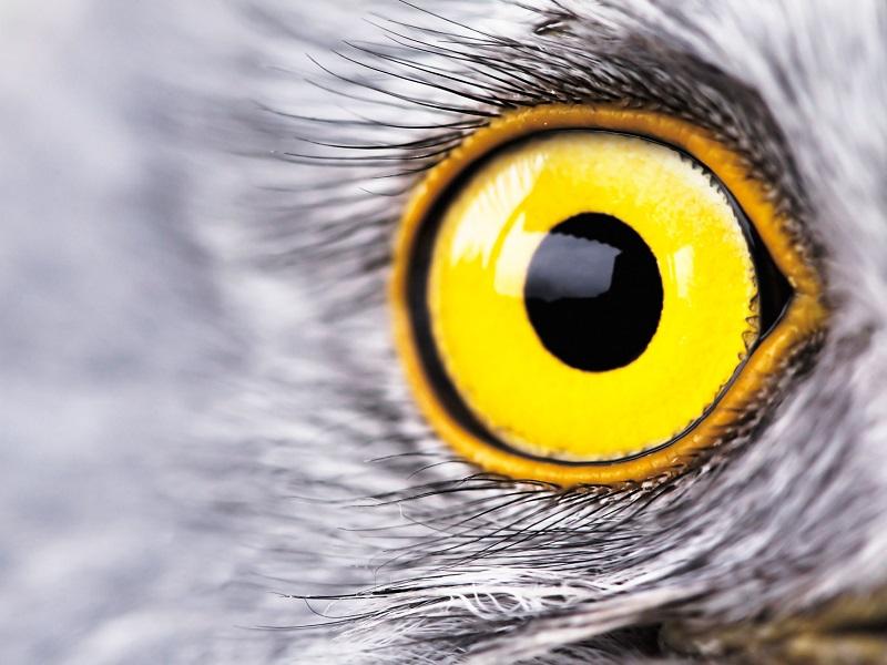 különleges látású emberek a látás erősen lebeg