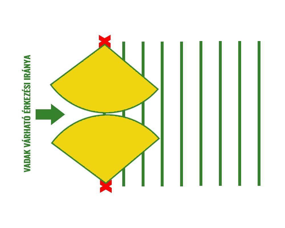Vadriasztó kihelyezése a sorokkal párhuzamosan